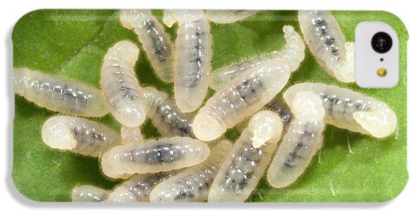 Black Garden Ant Larvae IPhone 5c Case by Nigel Downer