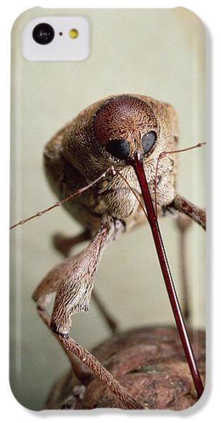 Black Oak Acorn Weevil Boring Into Acorn IPhone 5c Case by Mark Moffett