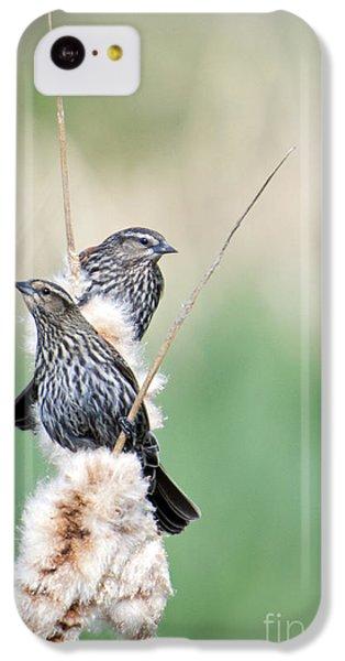 Blackbird Pair IPhone 5c Case by Mike  Dawson