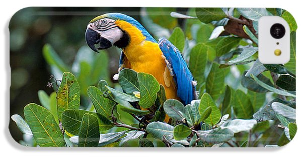 Blue And Yellow Macaw IPhone 5c Case by Art Wolfe