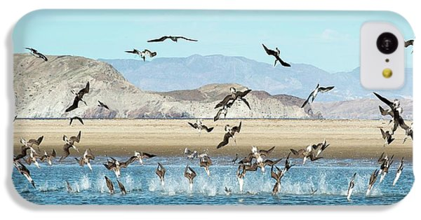 Blue-footed Boobies Feeding IPhone 5c Case by Christopher Swann