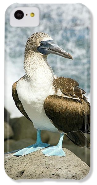 Blue-footed Booby IPhone 5c Case by Daniel Sambraus