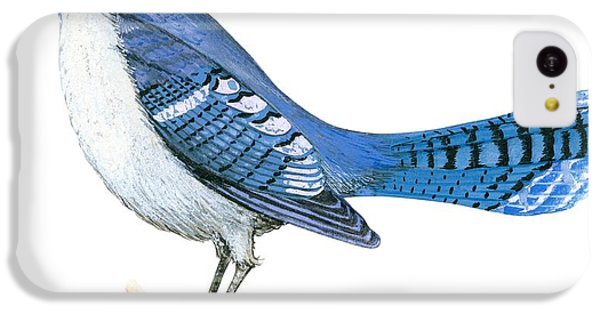 Blue Jay  IPhone 5c Case by Anonymous