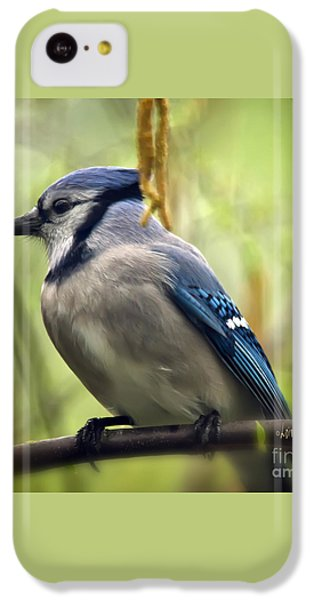 Blue Jay On A Misty Spring Day - Square Format IPhone 5c Case by Lois Bryan