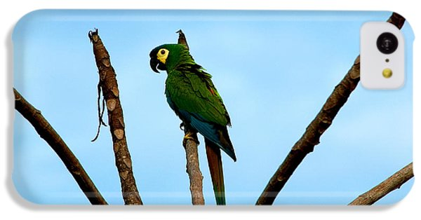 Blue-winged Macaw, Brazil IPhone 5c Case by Gregory G. Dimijian, M.D.