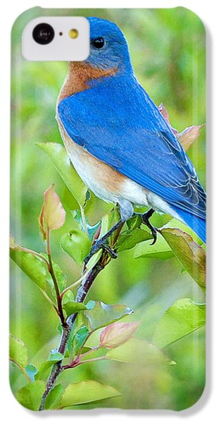 Bluebird Joy IPhone 5c Case by William Jobes