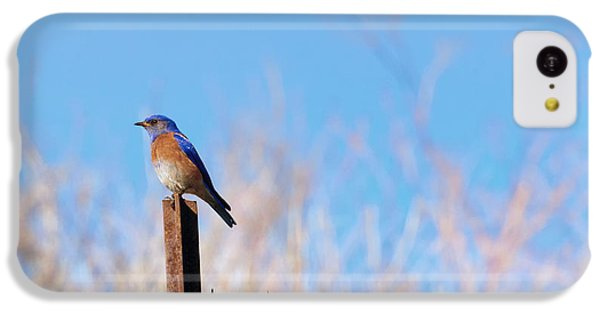 Bluebird On A Post IPhone 5c Case by Mike  Dawson
