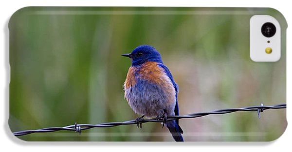 Bluebird On A Wire IPhone 5c Case by Mike  Dawson