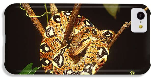 Boa Constrictor IPhone 5c Case by Art Wolfe