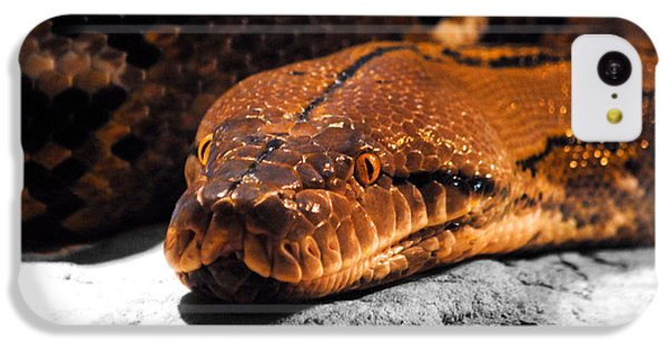 Boa Constrictor IPhone 5c Case by Jai Johnson