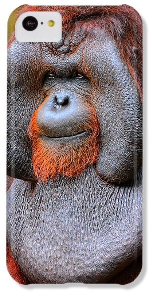 Bornean Orangutan Iv IPhone 5c Case by Lourry Legarde