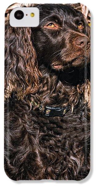 Boykin Spaniel Portrait IPhone 5c Case by Timothy Flanigan