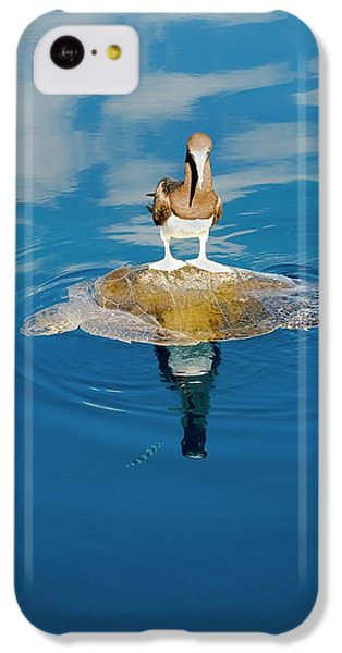 Brown Booby And Marine Turtle IPhone 5c Case by Christopher Swann