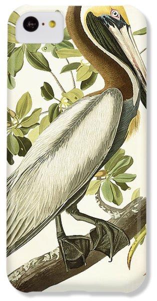 Brown Pelican IPhone 5c Case by John James Audubon