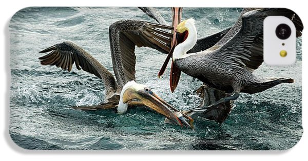 Brown Pelicans Stealing Food IPhone 5c Case by Christopher Swann