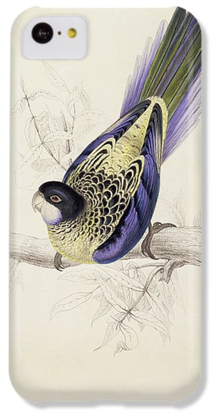 Browns Parakeet IPhone 5c Case by Edward Lear