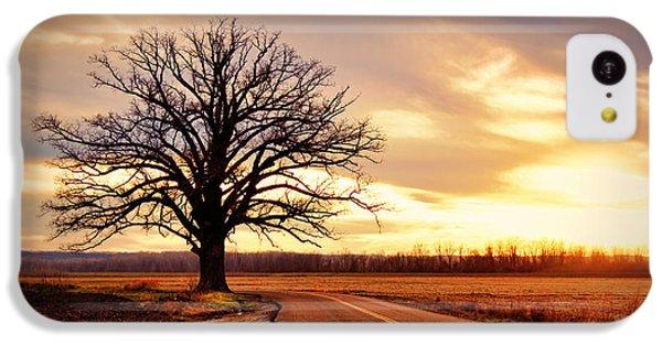 Burr Oak Silhouette IPhone 5c Case by Cricket Hackmann