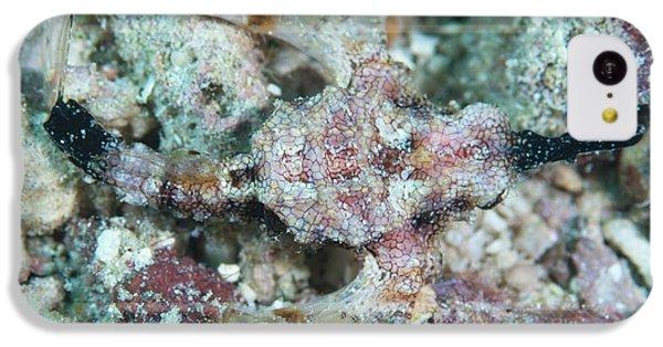 Camouflaged Pegasus Sea Moth IPhone 5c Case by Scubazoo