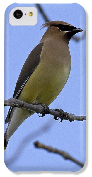 Cedar Waxwing 2 IPhone 5c Case by Eric Mace