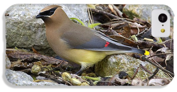 Cedar Waxwing IPhone 5c Case by Eric Mace