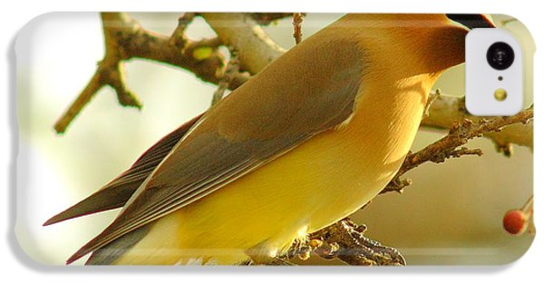 Cedar Waxwing IPhone 5c Case by Robert Frederick