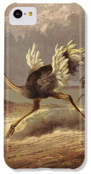 Chasing The Ostrich IPhone 5c Case by English School