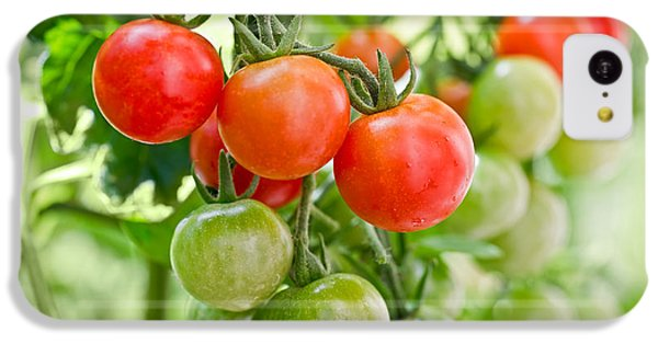 Cherry Tomatoes IPhone 5c Case by Delphimages Photo Creations