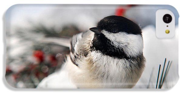 Chilly Chickadee IPhone 5c Case by Christina Rollo