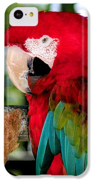 Chowtime IPhone 5c Case by Karen Wiles