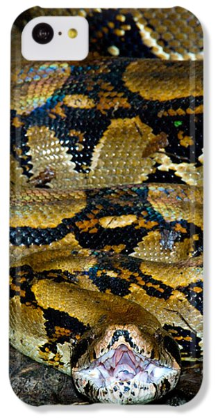 Close-up Of A Boa Constrictor, Arenal IPhone 5c Case by Panoramic Images