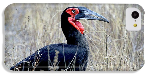 Close-up Of A Ground Hornbill, Kruger IPhone 5c Case by Miva Stock