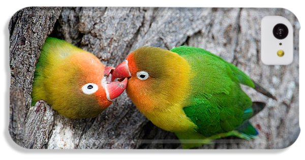 Close-up Of A Pair Of Lovebirds, Ndutu IPhone 5c Case by Panoramic Images