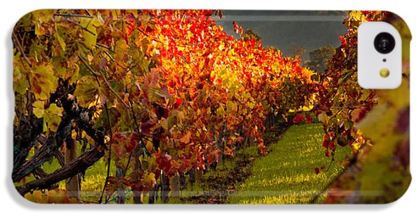 Color On The Vine IPhone 5c Case by Bill Gallagher