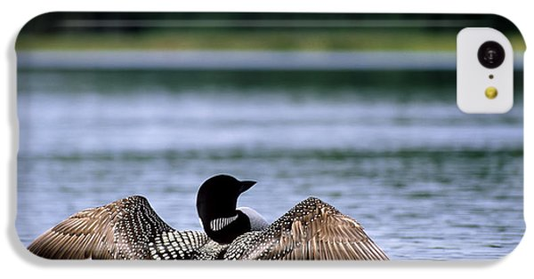 Common Loon IPhone 5c Case by Mark Newman