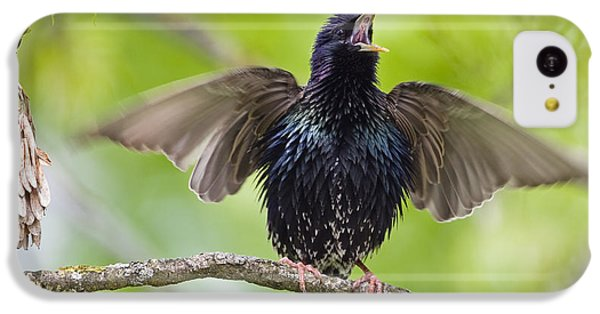 Common Starling Singing Bavaria IPhone 5c Case by Konrad Wothe