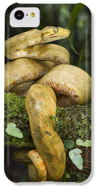 Common Tree Boa -yellow Morph IPhone 5c Case by Pete Oxford