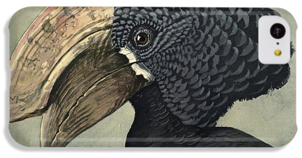 Crested Hornbill IPhone 5c Case by Louis Agassiz Fuertes