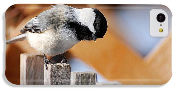 Curious Chickadee IPhone 5c Case by Christina Rollo
