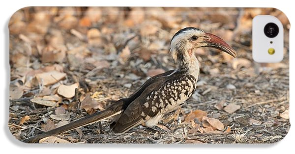 Damara Red-billed Hornbill Foraging IPhone 5c Case by Tony Camacho