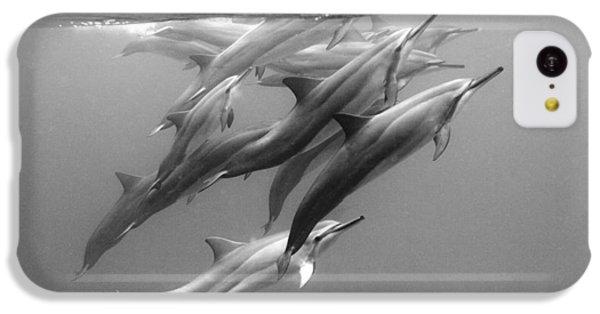 Dolphin Pod IPhone 5c Case by Sean Davey