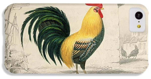 Domestic Cock IPhone 5c Case by Edouard Travies