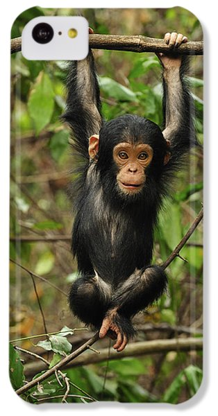 Eastern Chimpanzee Baby Hanging IPhone 5c Case by Thomas Marent