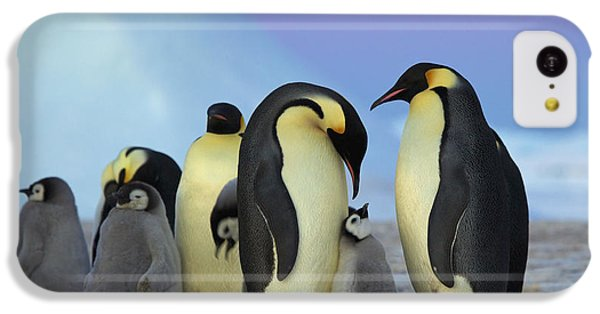 Emperor Penguin Parents And Chick IPhone 5c Case by Frederique Olivier