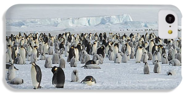 Emperor Penguins Aptenodytes Forsteri IPhone 5c Case by Panoramic Images