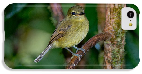 Flavescent Flycatcher IPhone 5c Case by Anthony Mercieca
