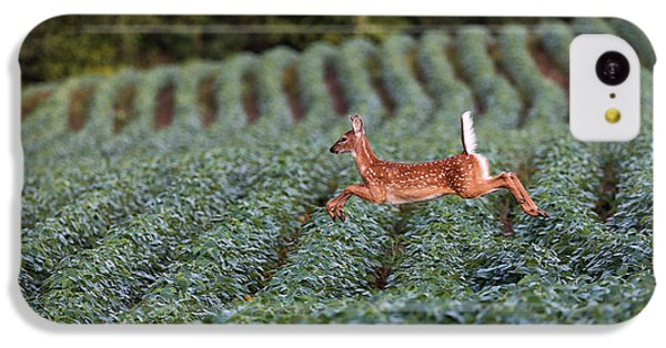 Flight Of The White-tailed Deer IPhone 5c Case by Everet Regal