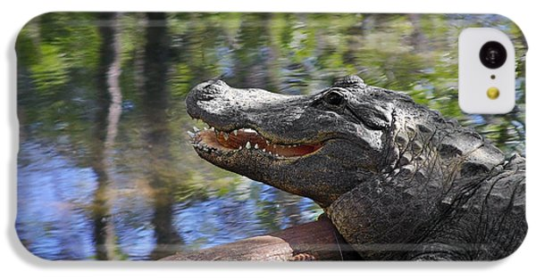 Florida - Where The Alligator Smiles IPhone 5c Case by Christine Till