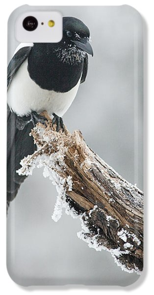 Frosted Magpie IPhone 5c Case by Tim Grams