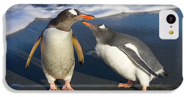 Gentoo Penguin Chick Begging For Food IPhone 5c Case by Yva Momatiuk and John Eastcott