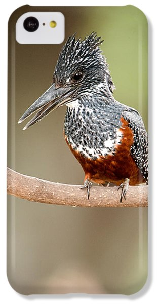 Giant Kingfisher Megaceryle Maxima IPhone 5c Case by Panoramic Images
